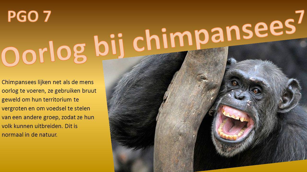 Oorlog bij chimpansees7