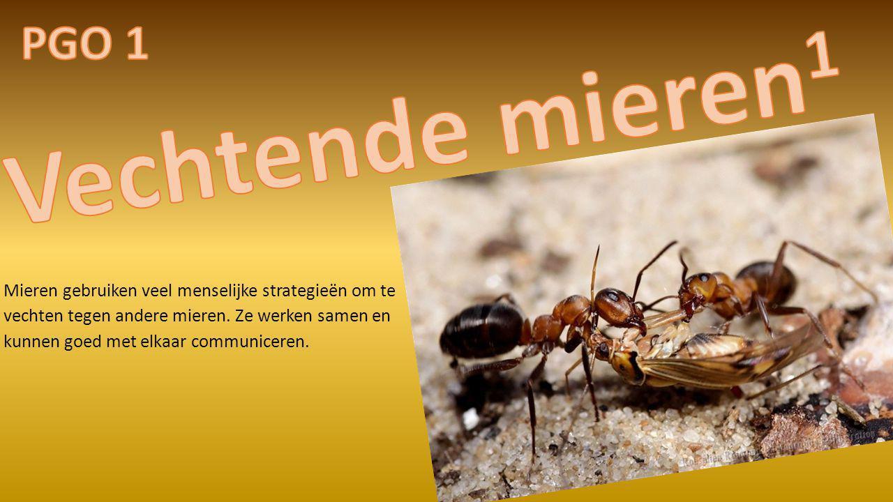 PGO 1 Vechtende mieren1.