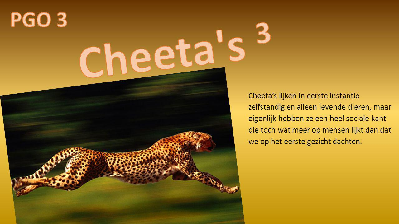 PGO 3 Cheeta s 3.