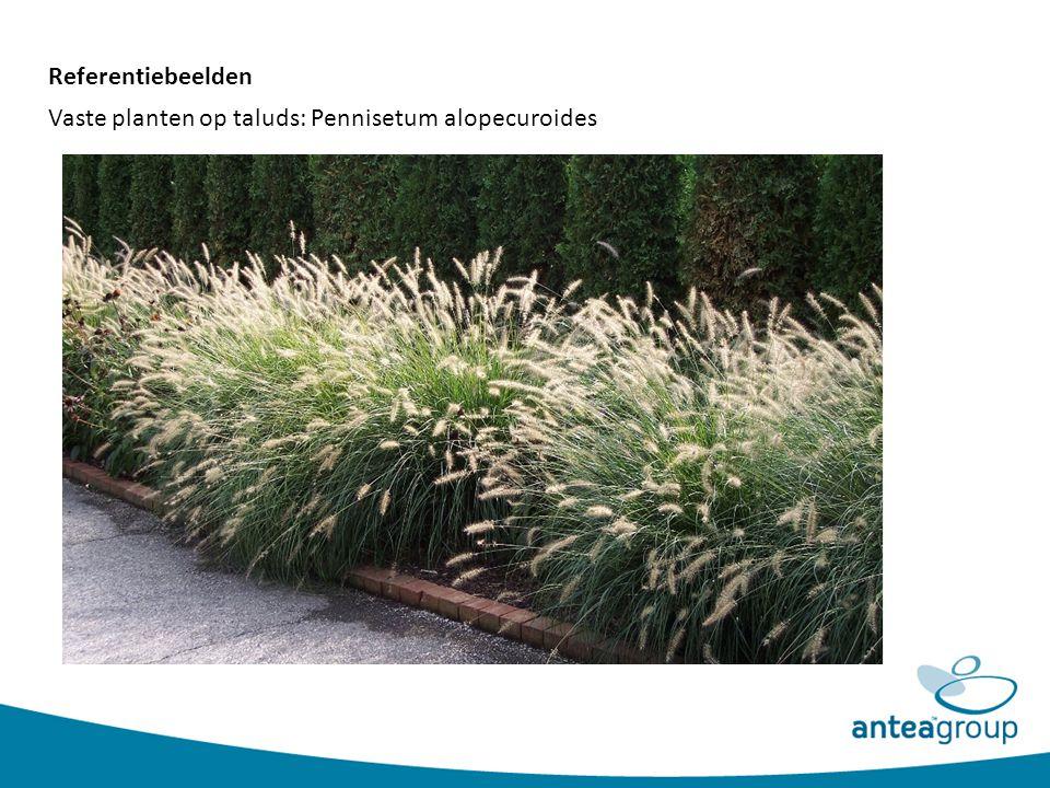 Referentiebeelden Vaste planten op taluds: Pennisetum alopecuroides