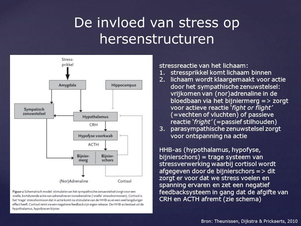 De invloed van stress op hersenstructuren