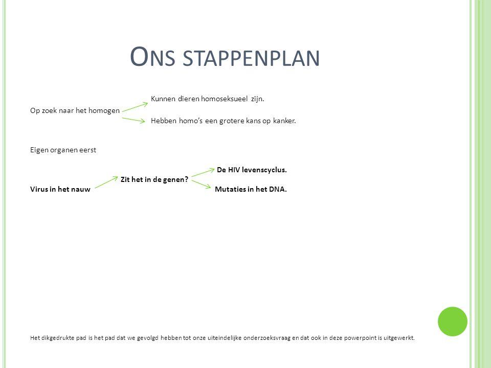 Ons stappenplan