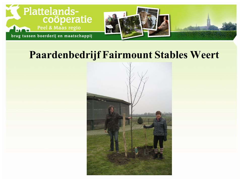Paardenbedrijf Fairmount Stables Weert