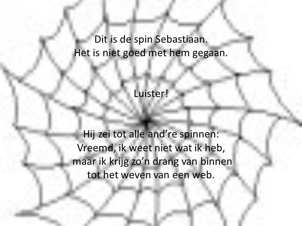 Dit is de spin Sebastiaan. Het is niet goed met hem gegaan.