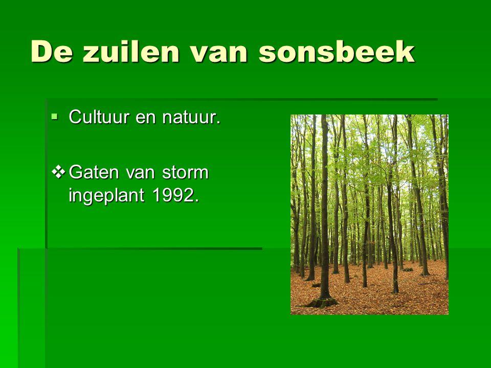 De zuilen van sonsbeek Cultuur en natuur.