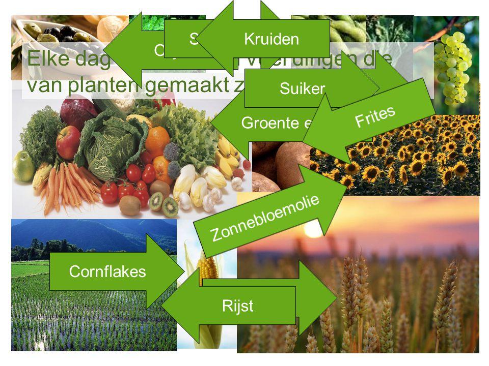 Elke dag eten we heel veel dingen die van planten gemaakt zijn