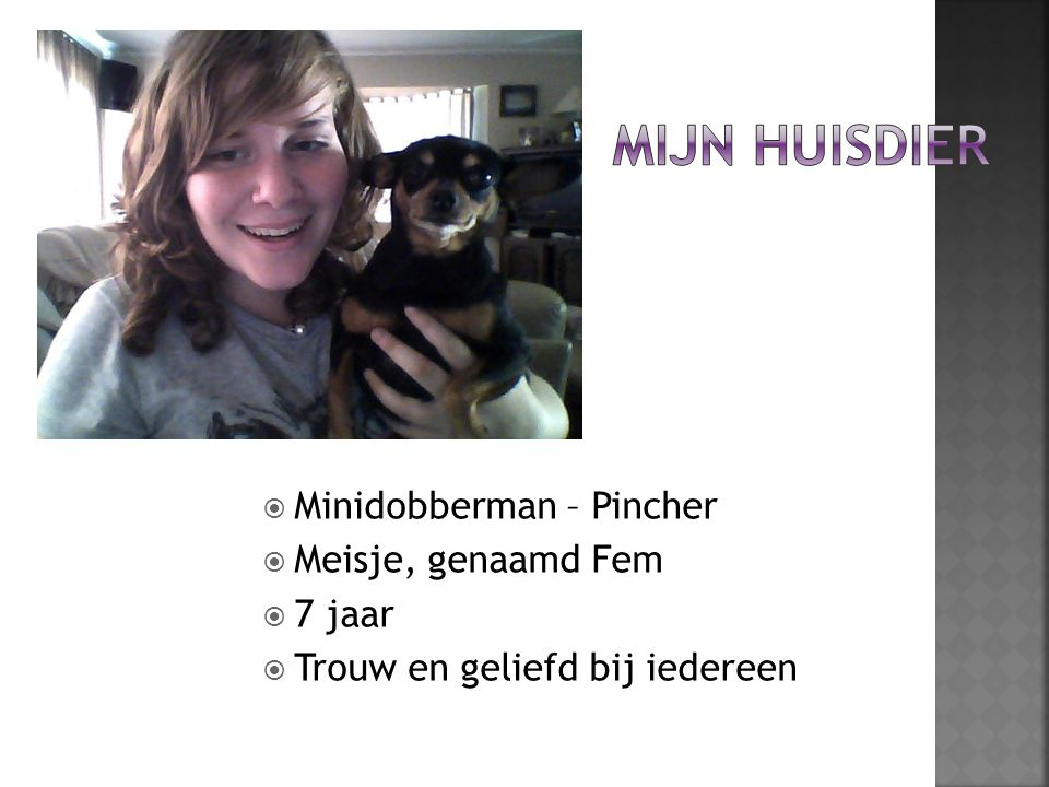 Mijn huisdier Minidobberman – Pincher Meisje, genaamd Fem 7 jaar