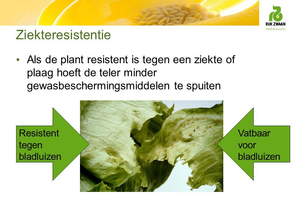 Ziekteresistentie Als de plant resistent is tegen een ziekte of plaag hoeft de teler minder gewasbeschermingsmiddelen te spuiten.