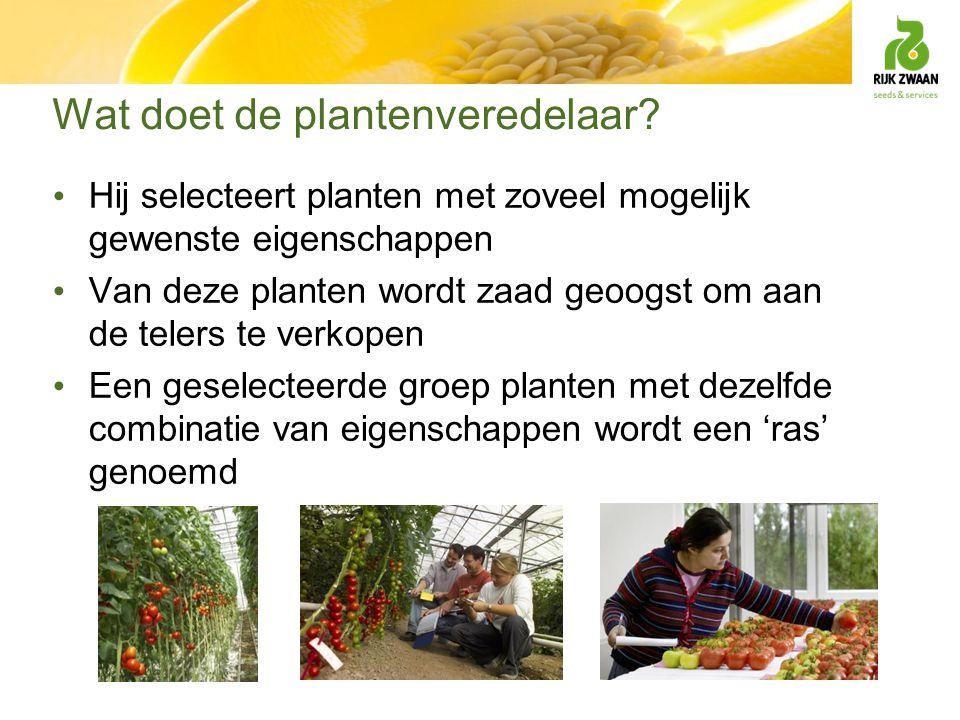 Wat doet de plantenveredelaar