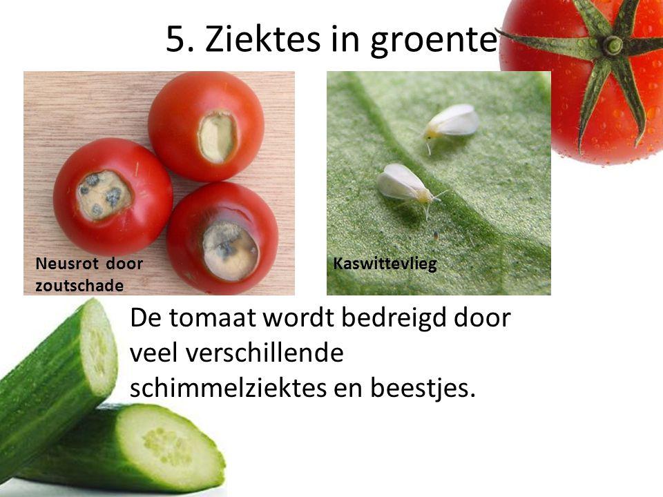 5. Ziektes in groente Neusrot door zoutschade. Kaswittevlieg.