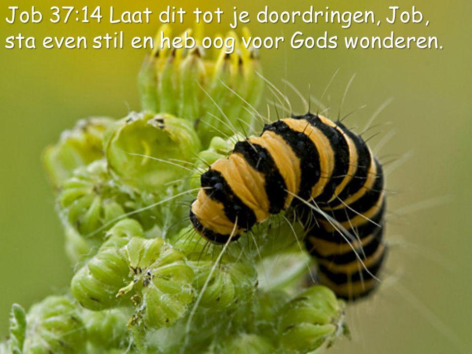 Job 37:14 Laat dit tot je doordringen, Job,