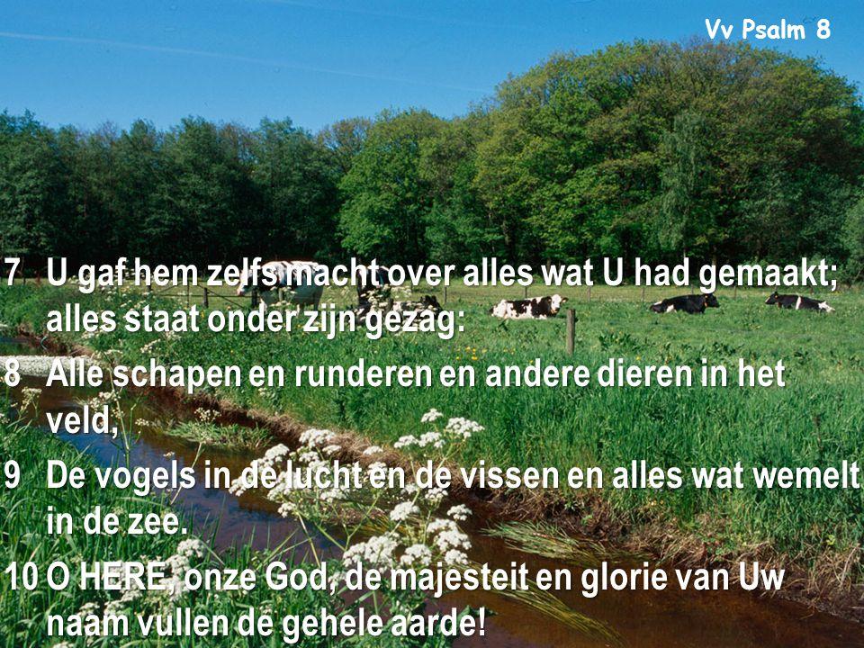 Vv Psalm 8