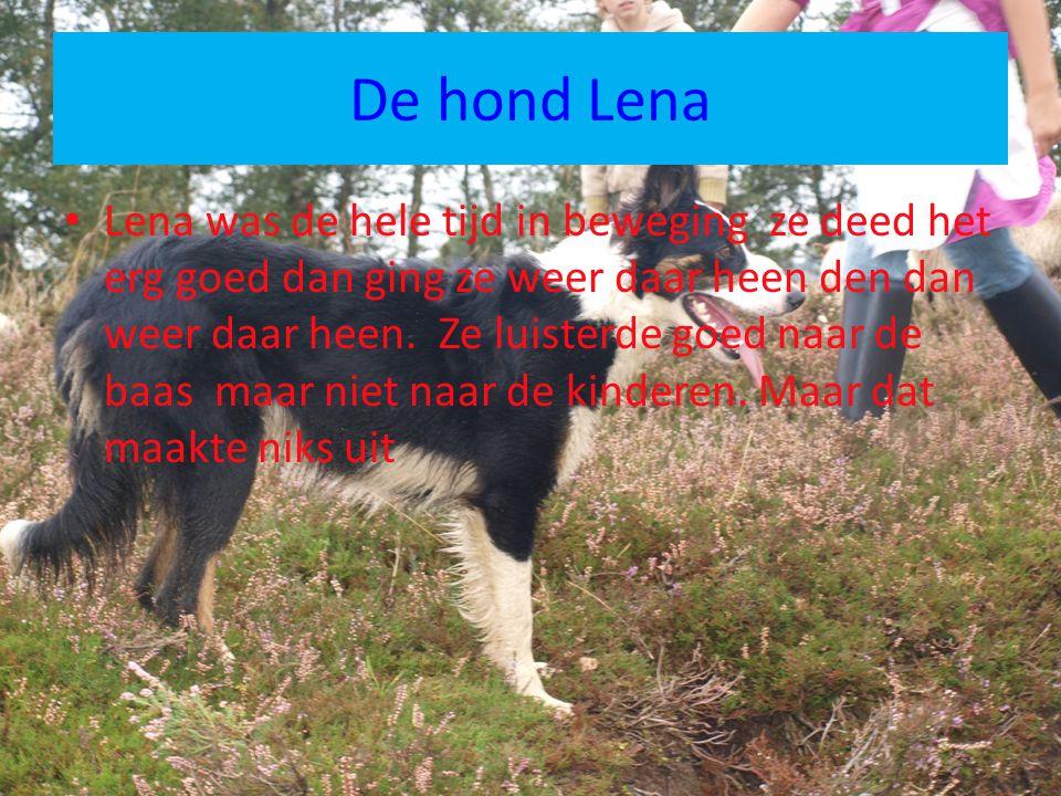De hond Lena