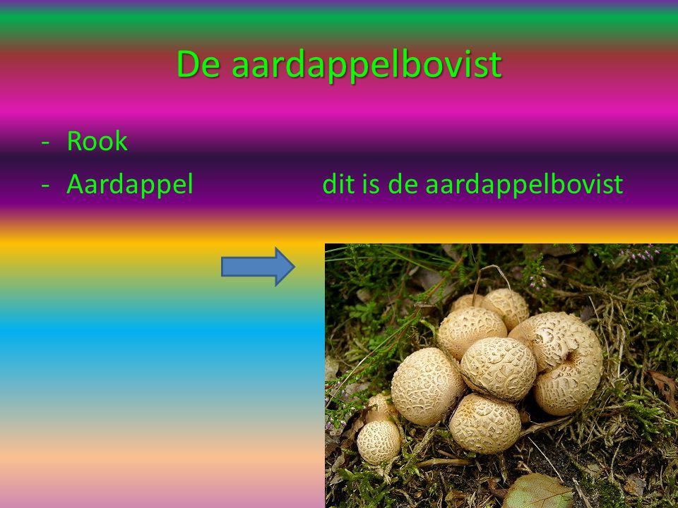 De aardappelbovist Rook Aardappel dit is de aardappelbovist