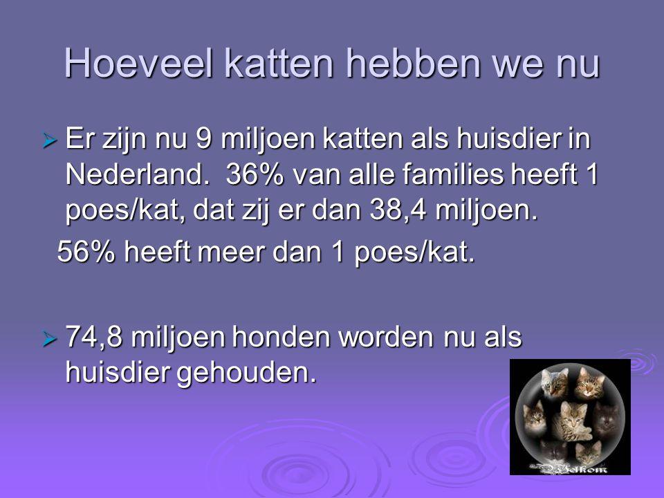 Hoeveel katten hebben we nu