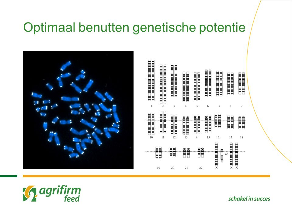 Optimaal benutten genetische potentie