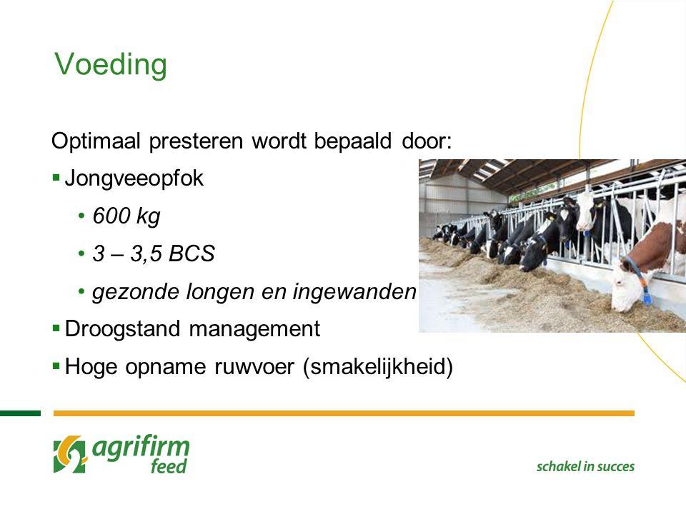 Voeding Optimaal presteren wordt bepaald door: Jongveeopfok 600 kg