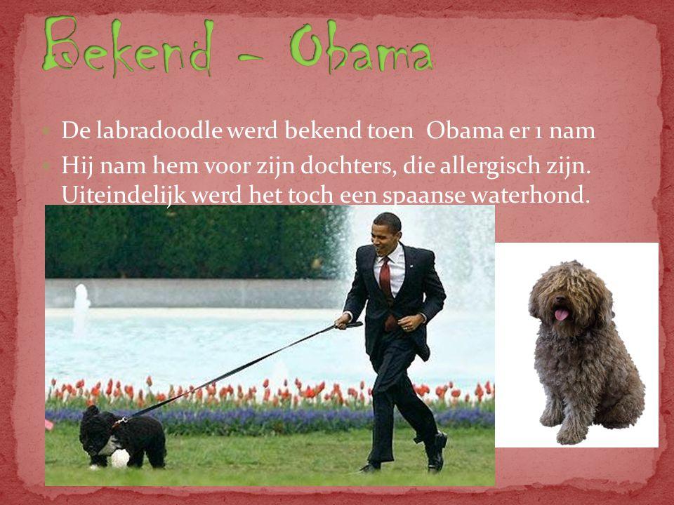 Bekend - Obama De labradoodle werd bekend toen Obama er 1 nam