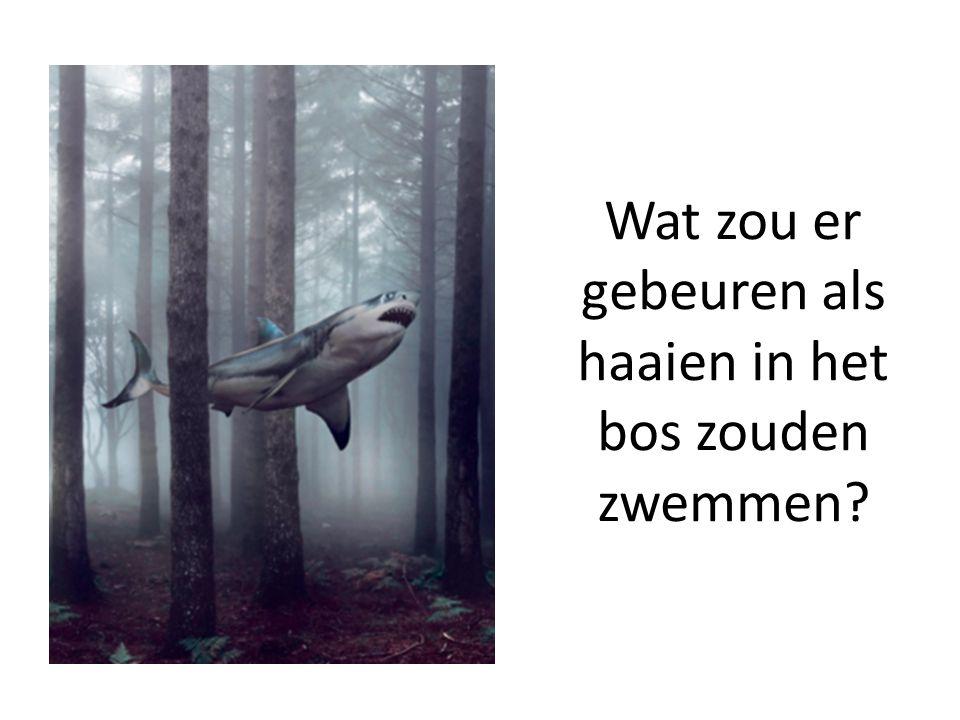 Wat zou er gebeuren als haaien in het bos zouden zwemmen