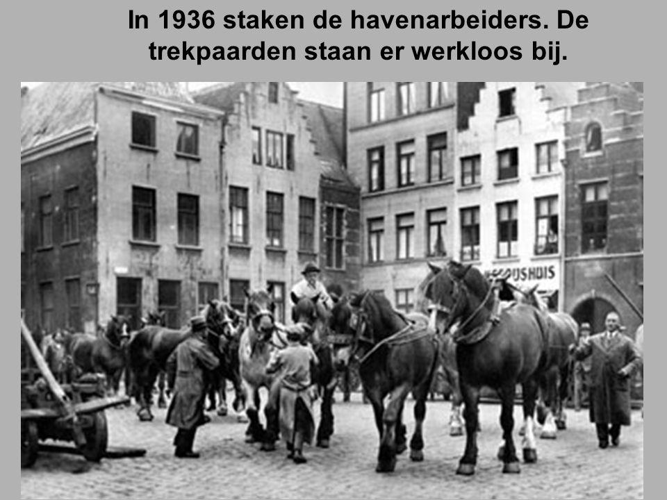 In 1936 staken de havenarbeiders. De trekpaarden staan er werkloos bij.