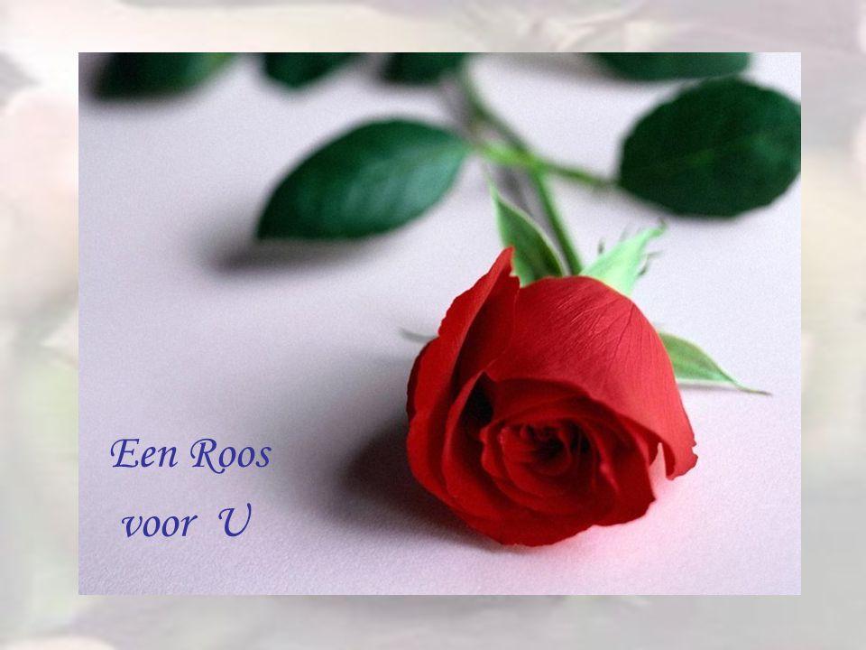 Einde Een Roos voor U