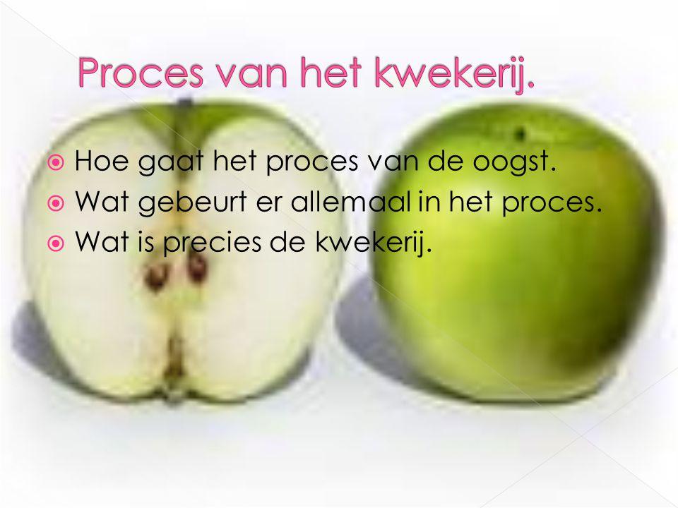 Proces van het kwekerij.