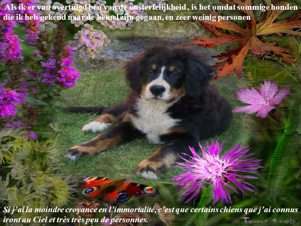 Als ik er van overtuigd ben van de onsterfelijkheid , is het omdat sommige honden die ik heb gekend naar de hemel zijn gegaan, en zeer weinig personen
