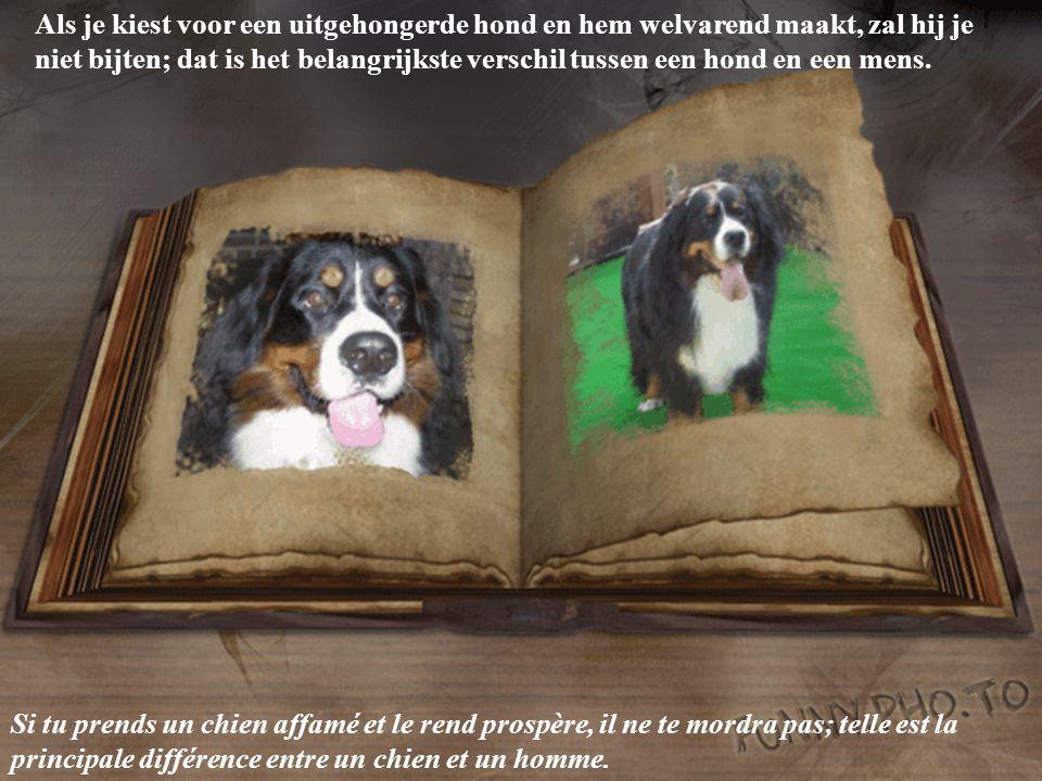 Als je kiest voor een uitgehongerde hond en hem welvarend maakt, zal hij je niet bijten; dat is het belangrijkste verschil tussen een hond en een mens.