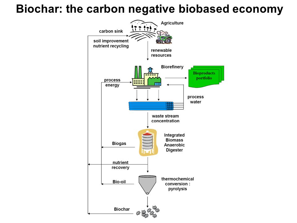 Biochar: the carbon negative biobased economy