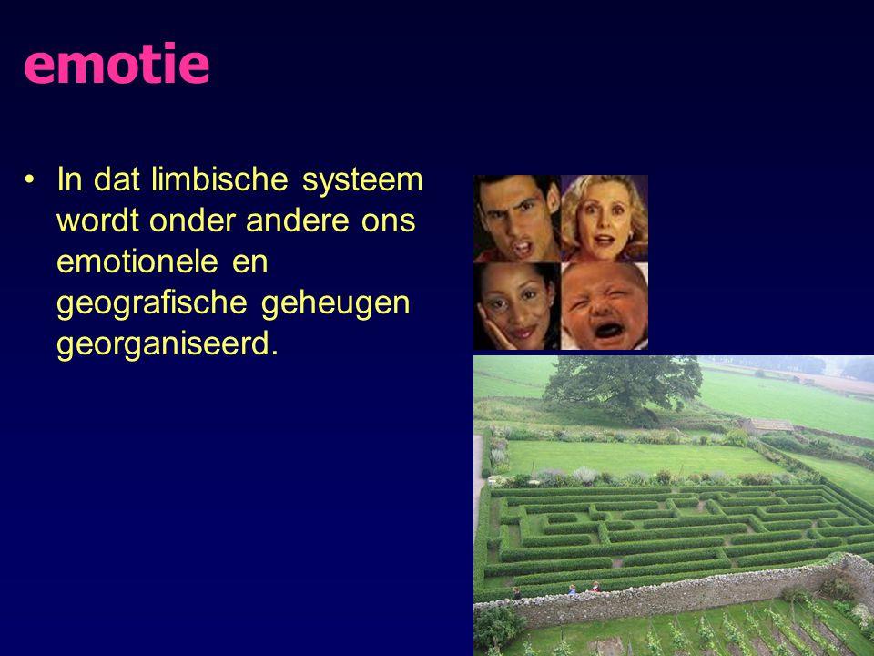 emotie In dat limbische systeem wordt onder andere ons emotionele en geografische geheugen georganiseerd.