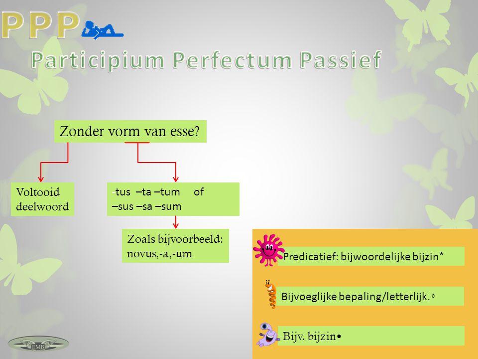Participium Perfectum Passief