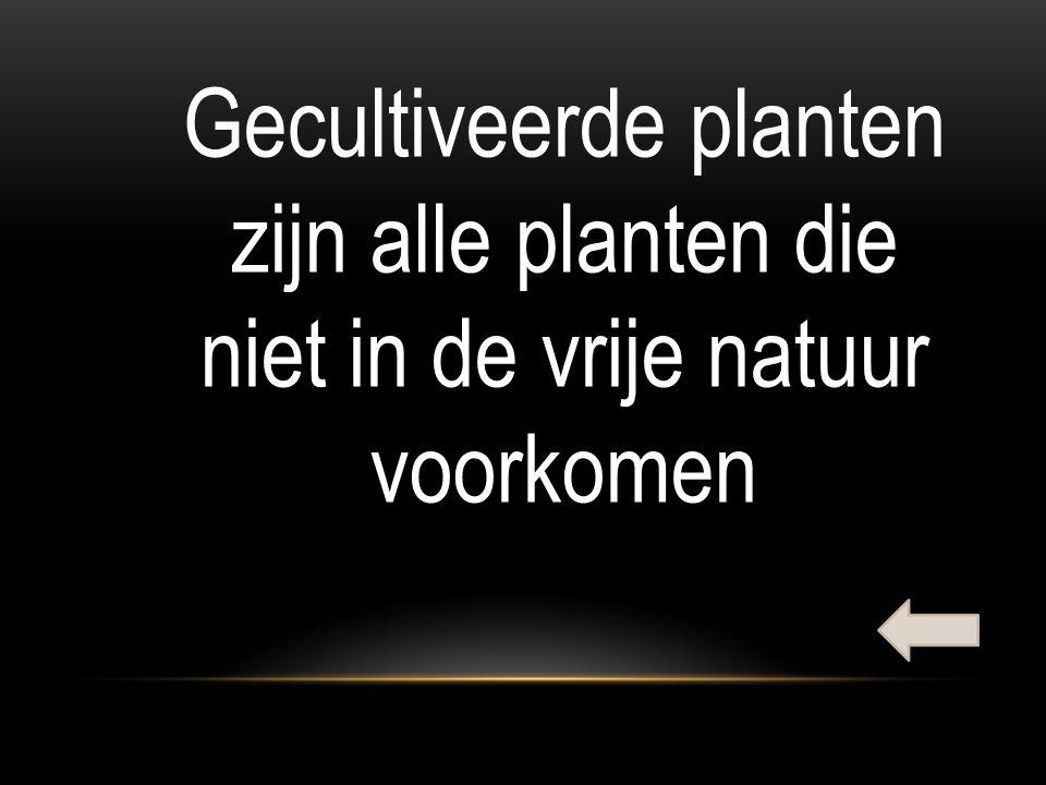 Gecultiveerde planten zijn alle planten die niet in de vrije natuur voorkomen