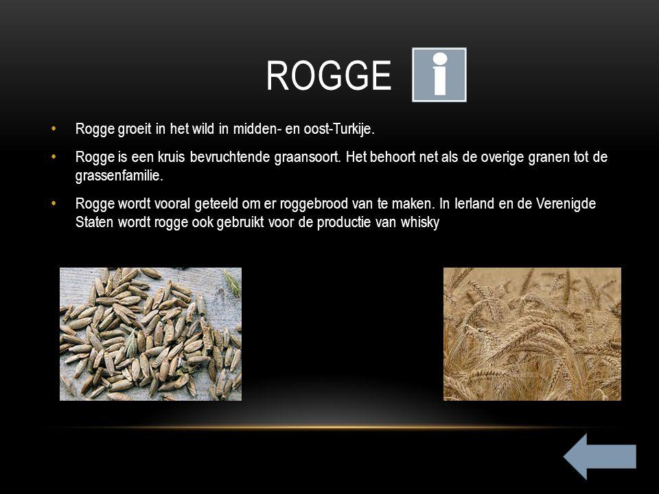 Rogge Rogge groeit in het wild in midden- en oost-Turkije.