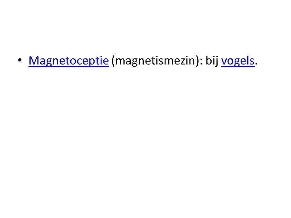 Magnetoceptie (magnetismezin): bij vogels.