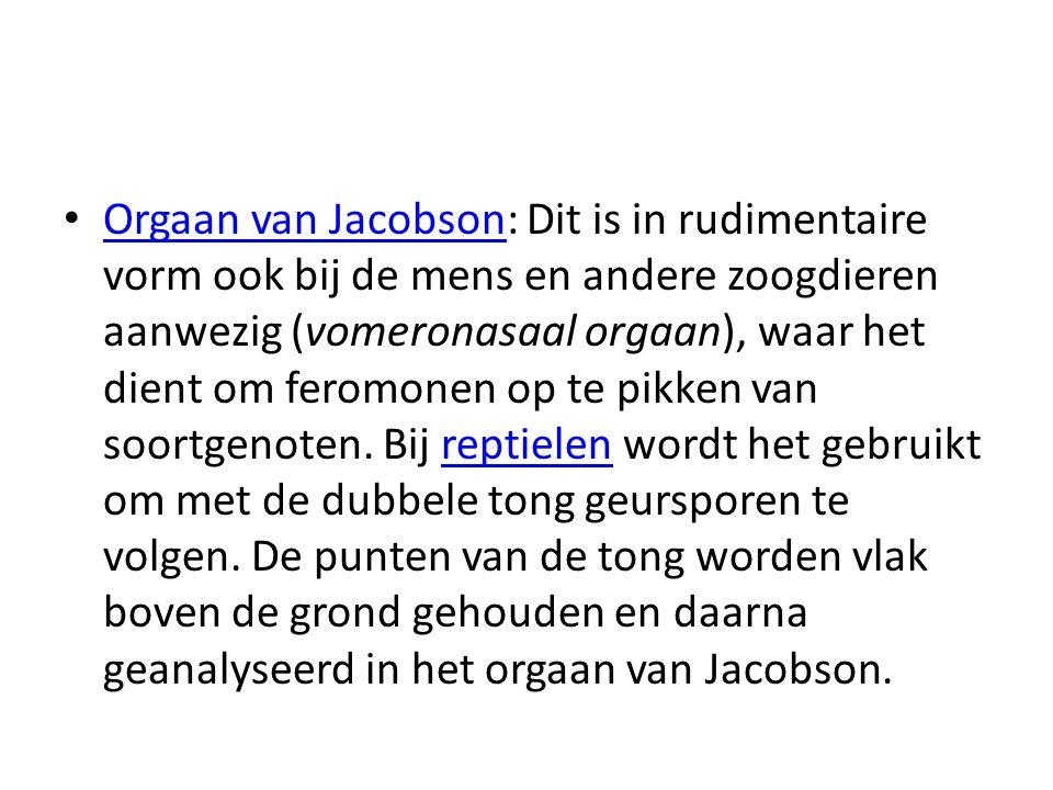 Orgaan van Jacobson: Dit is in rudimentaire vorm ook bij de mens en andere zoogdieren aanwezig (vomeronasaal orgaan), waar het dient om feromonen op te pikken van soortgenoten.