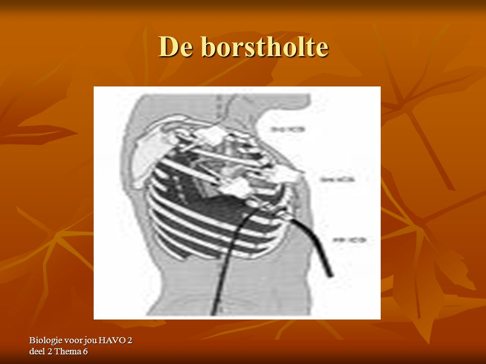 De borstholte Biologie voor jou HAVO 2 deel 2 Thema 6