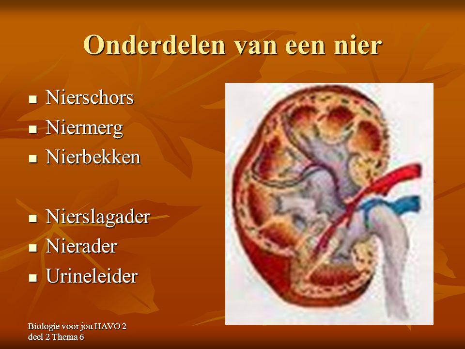 Onderdelen van een nier