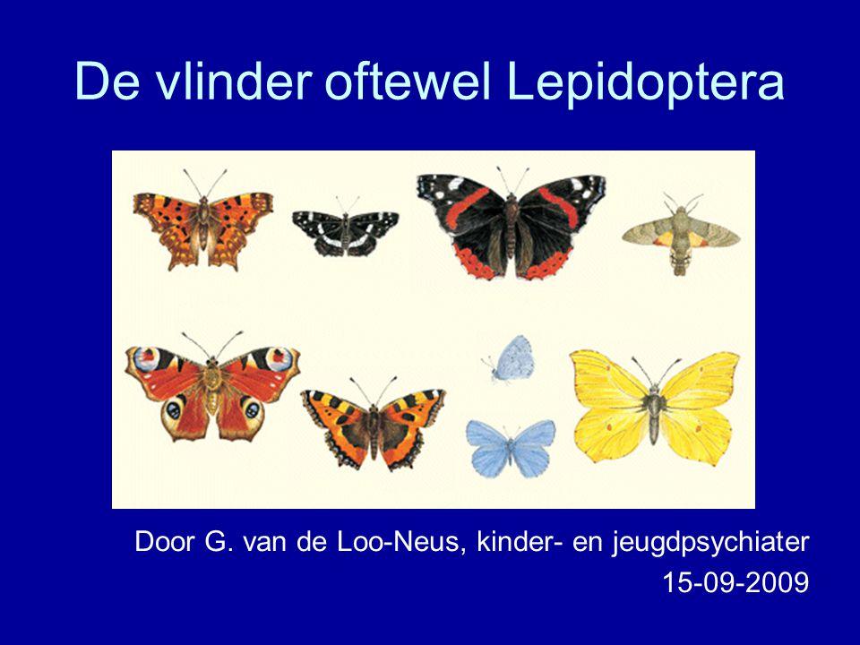 De vlinder oftewel Lepidoptera
