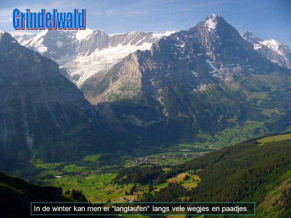 Grindelwald In de winter kan men er langlaufen langs vele wegjes en paadjes.
