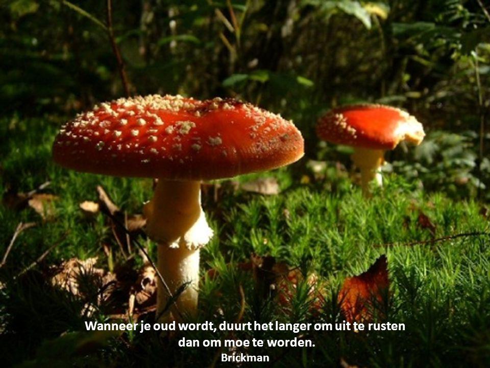 Citaten Herfst Engels : De herfst is begonnen… met enkele citaten over oud worden