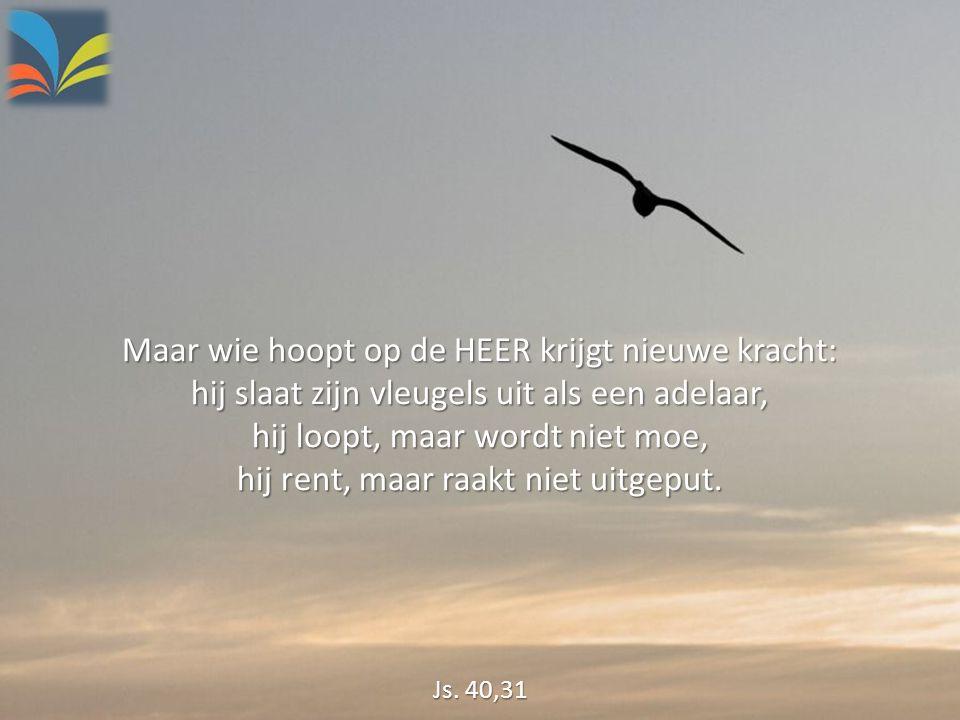 Maar wie hoopt op de HEER krijgt nieuwe kracht: hij slaat zijn vleugels uit als een adelaar, hij loopt, maar wordt niet moe, hij rent, maar raakt niet uitgeput.