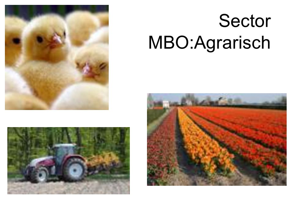 Sector MBO:Agrarisch