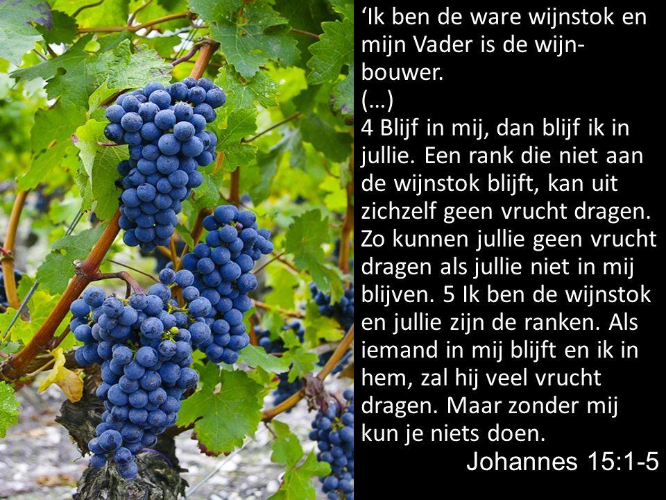 'Ik ben de ware wijnstok en mijn Vader is de wijn-bouwer.