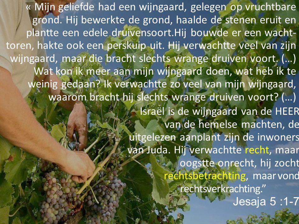 « Mijn geliefde had een wijngaard, gelegen op vruchtbare grond