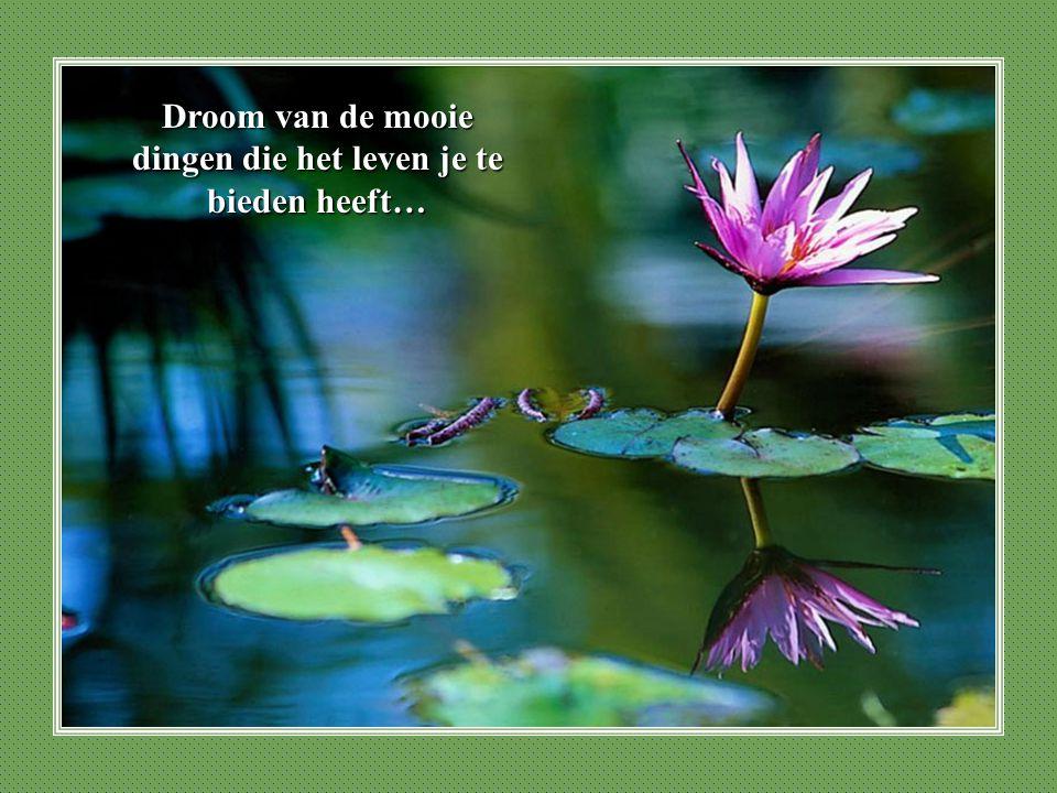 Droom van de mooie dingen die het leven je te bieden heeft…