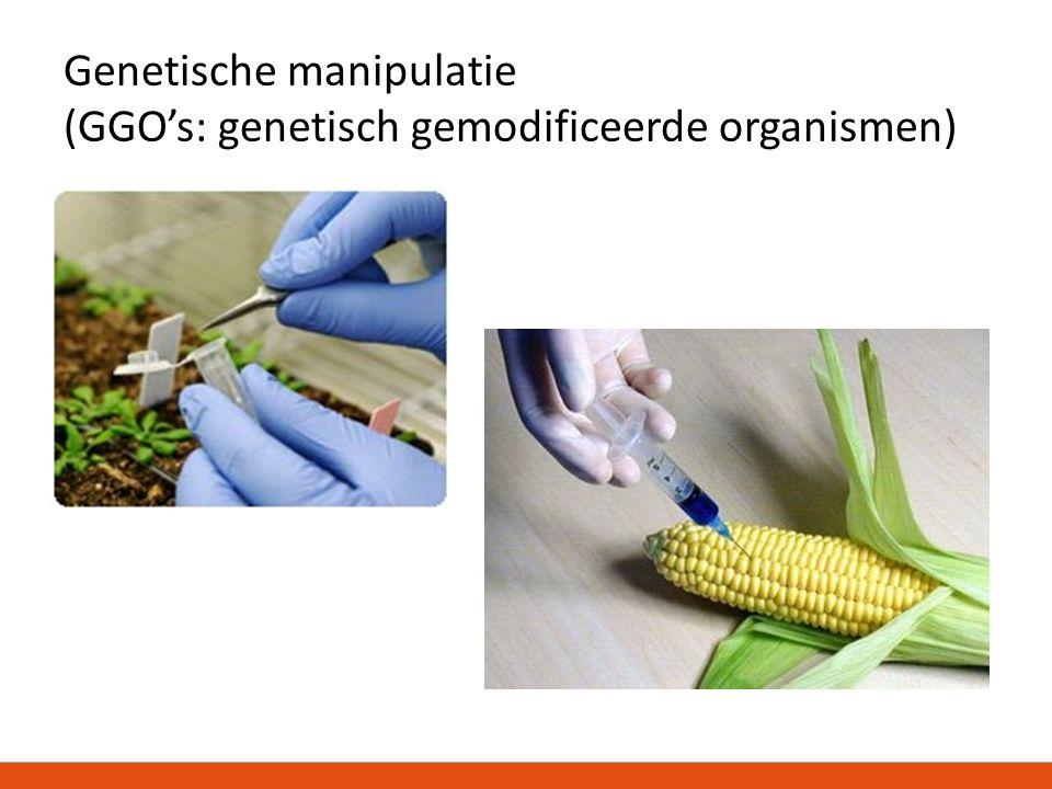 Genetische manipulatie (GGO's: genetisch gemodificeerde organismen)