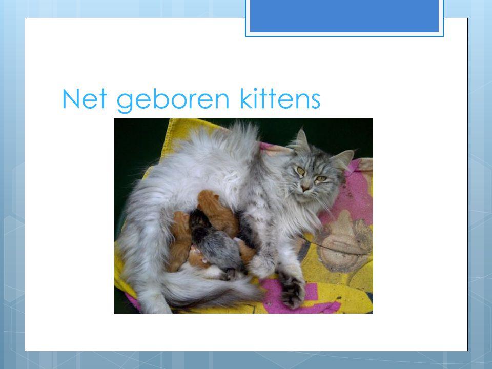Net geboren kittens