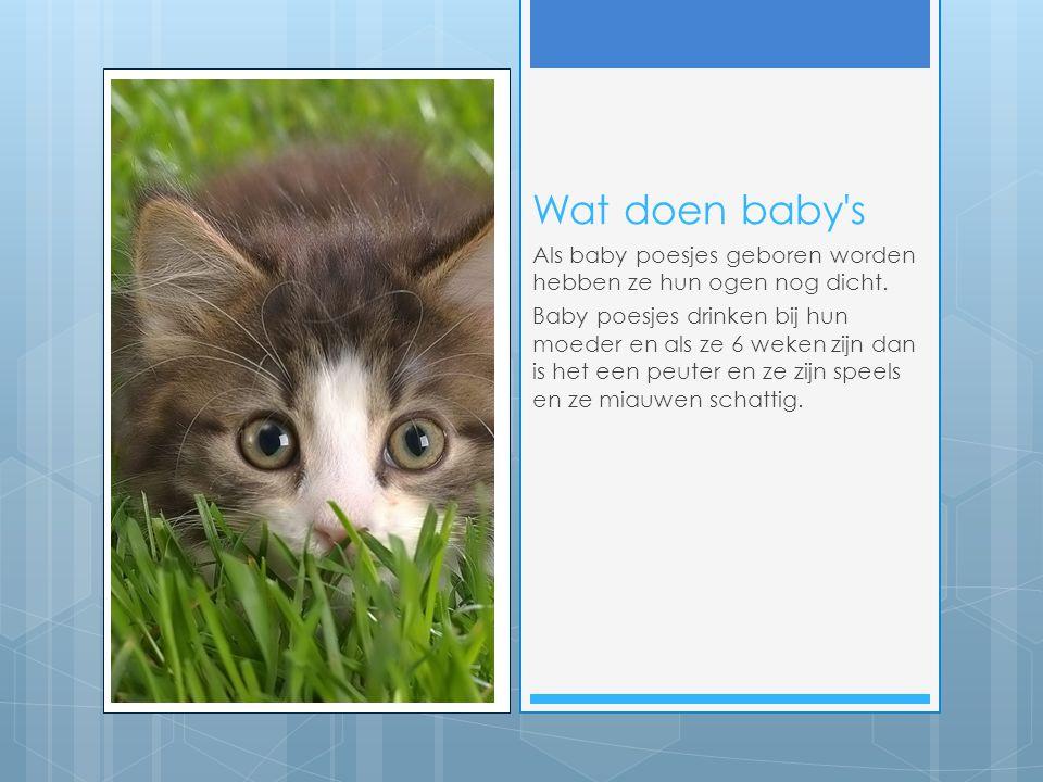 Wat doen baby s Als baby poesjes geboren worden hebben ze hun ogen nog dicht.