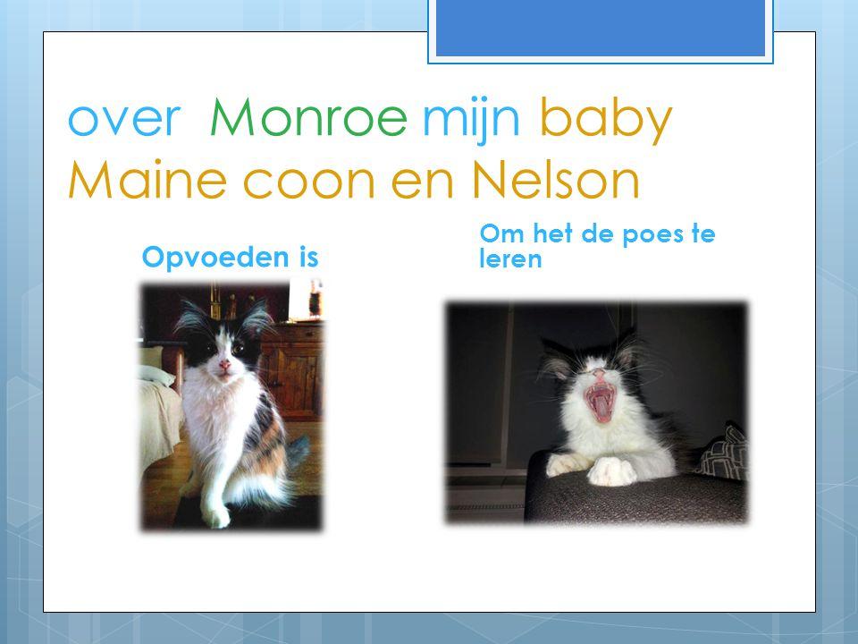 over Monroe mijn baby Maine coon en Nelson