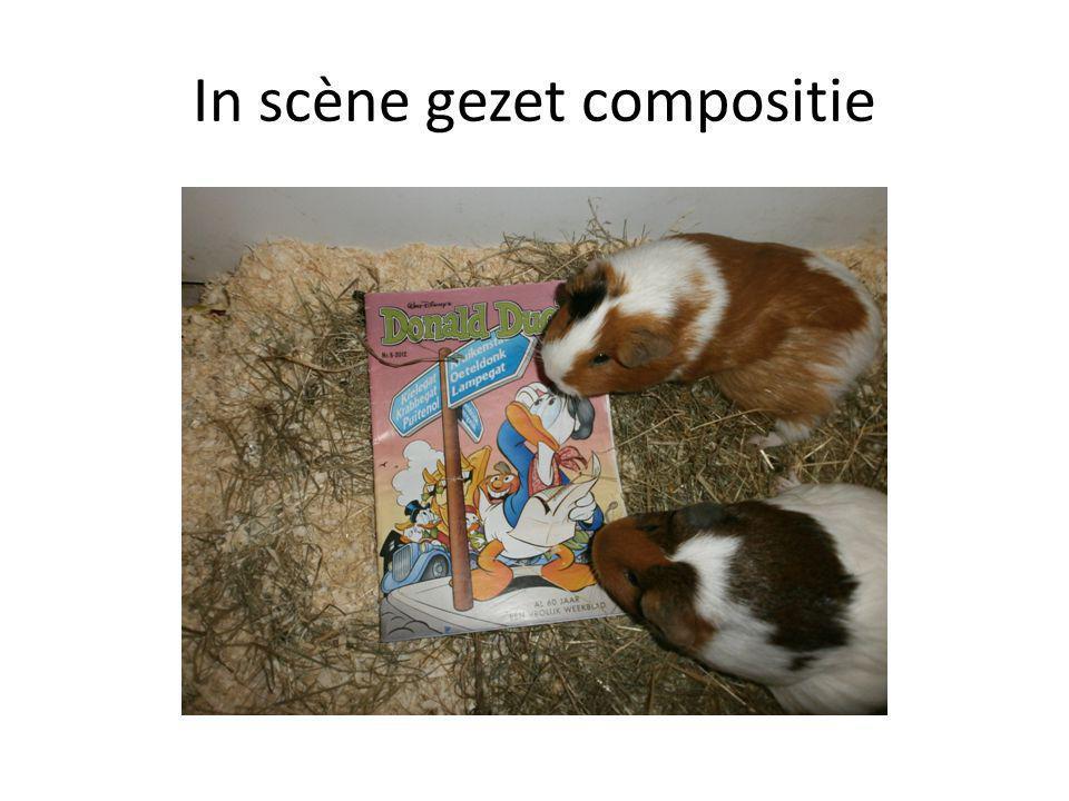 In scène gezet compositie